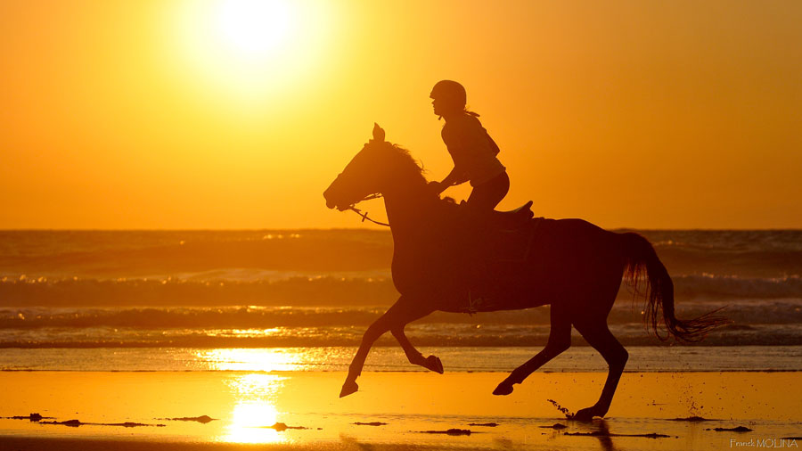 Canter on the beach at sunset