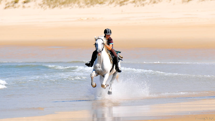 fast gallop on the Atlantic Coast beaches