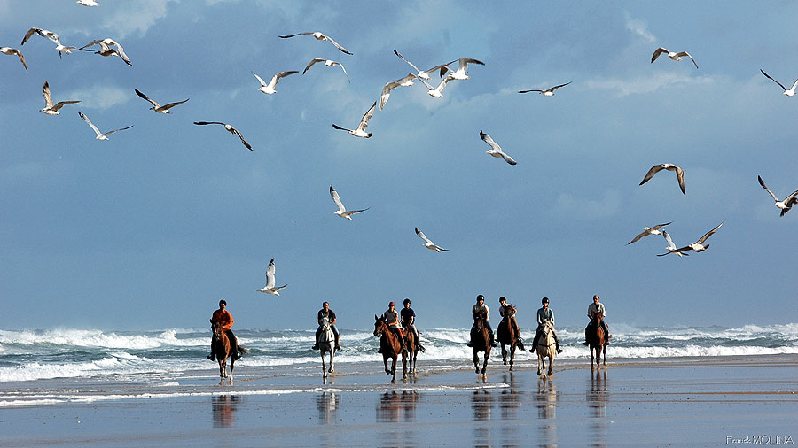 many sea brids accompany us on our beach rides