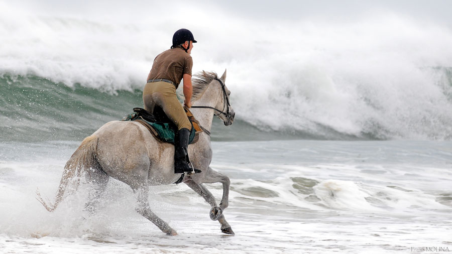cantering along beside a stormy Atlantic Ocean