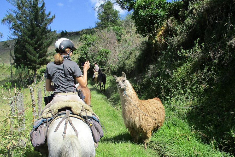 horseback vacation wild Andes
