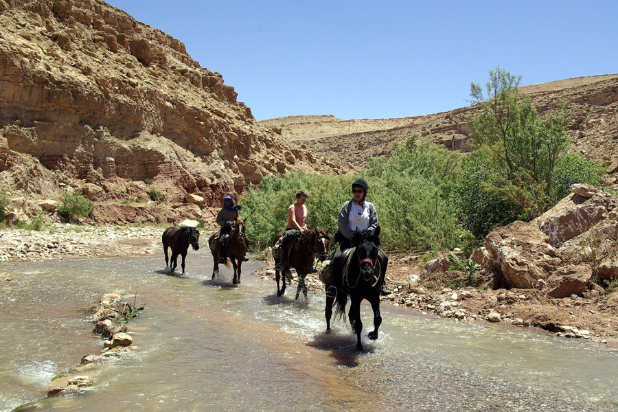 horses paddling in the Atlas mountains