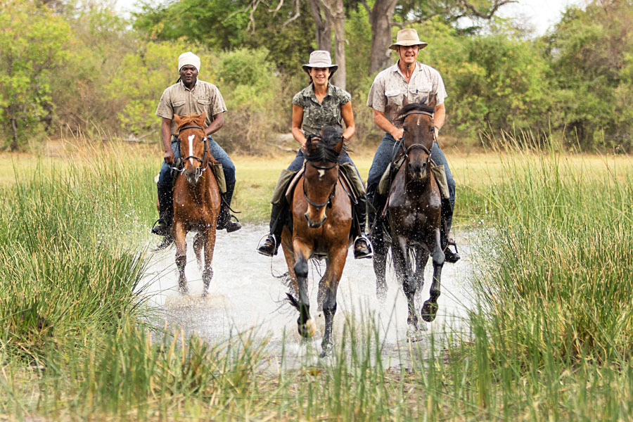 Cantering in the Okavango Delta flood plains