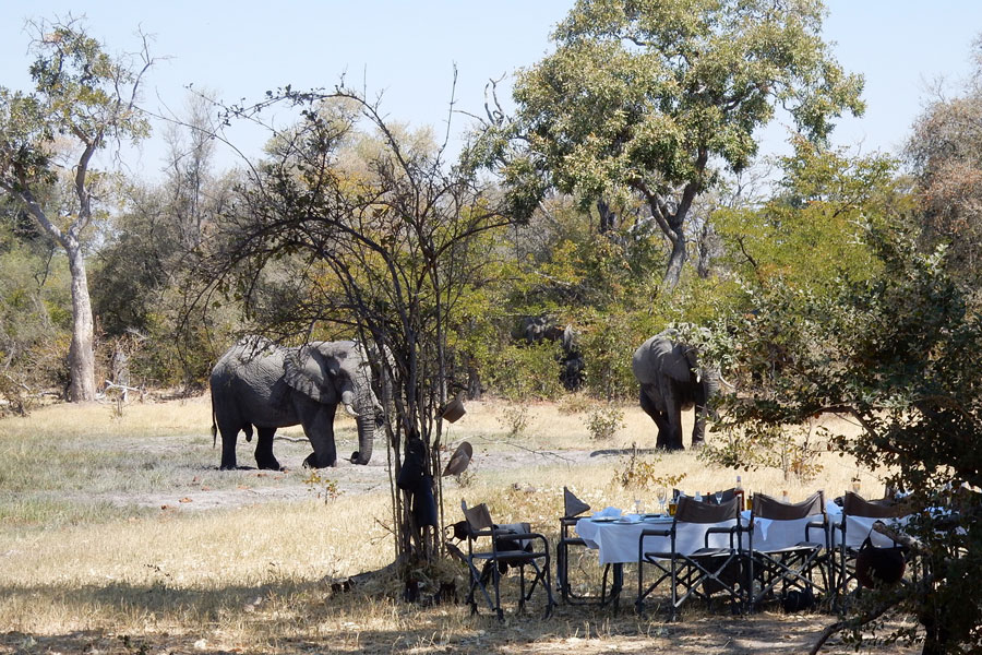 Elephants at the lunch table on Okavango horse ride