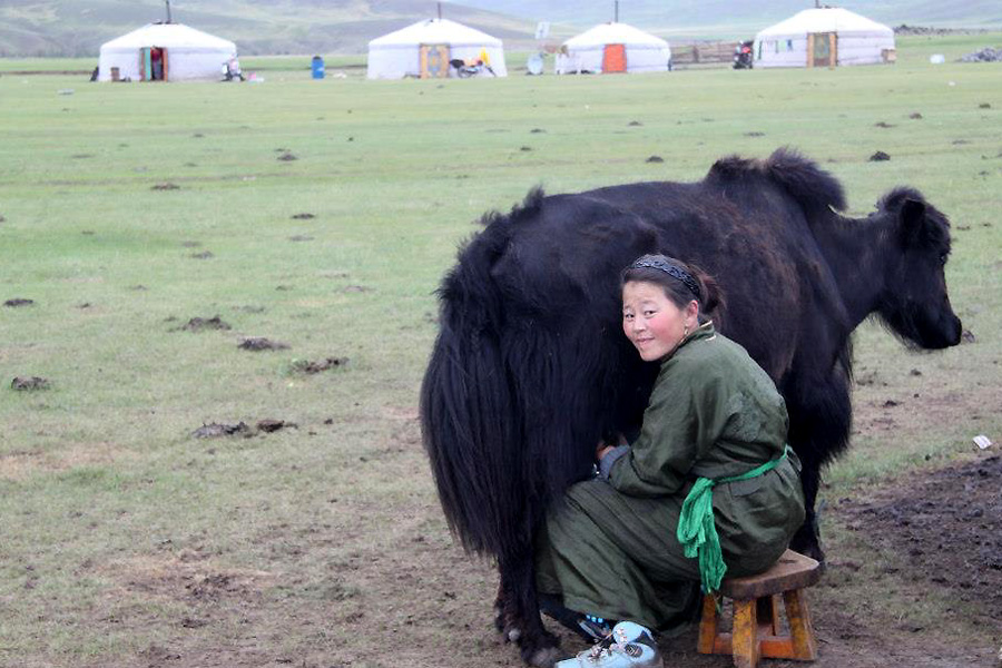 experience nomadic culture in Mongolia