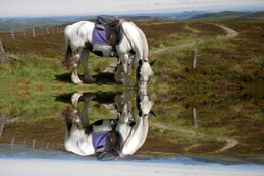 Horse riding holiday in Scotland