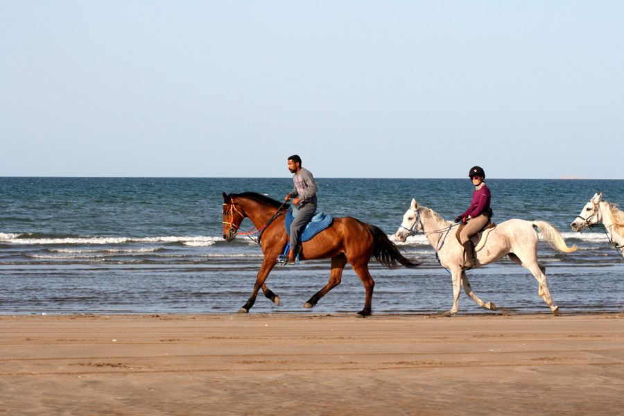 Fast beach riding holiday in Oman