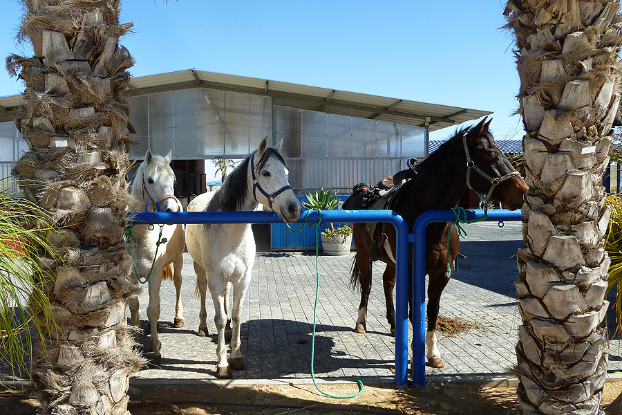Horse riding holiday in the Negev desert