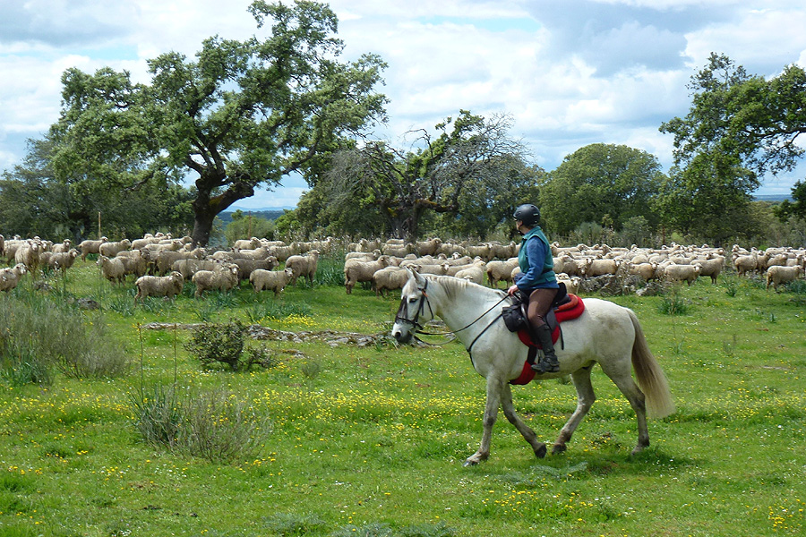 Horse riding holiday in Spanish countryside