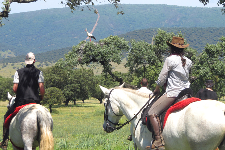 Bird watchin on horseback in Spain