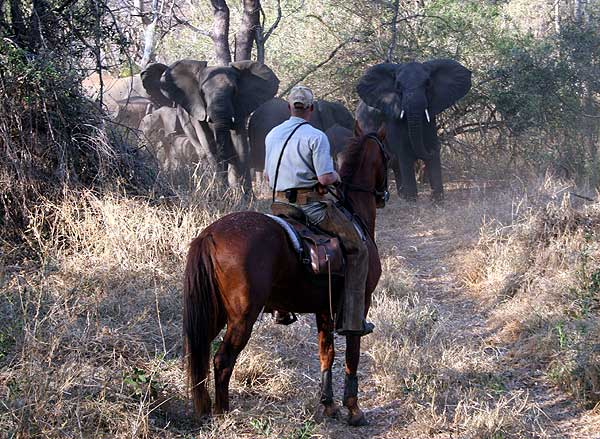 Big 5 horseback safari