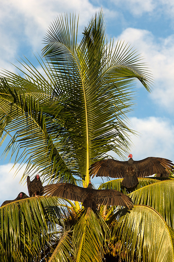 Wildlife in Cuba (c. Shawn Hamilton)