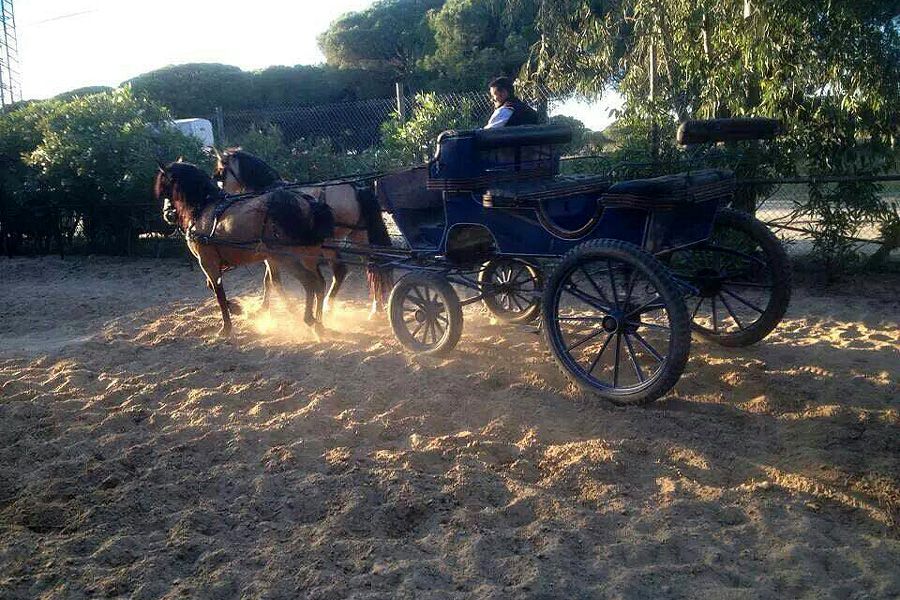 Horse cart vacations Spain