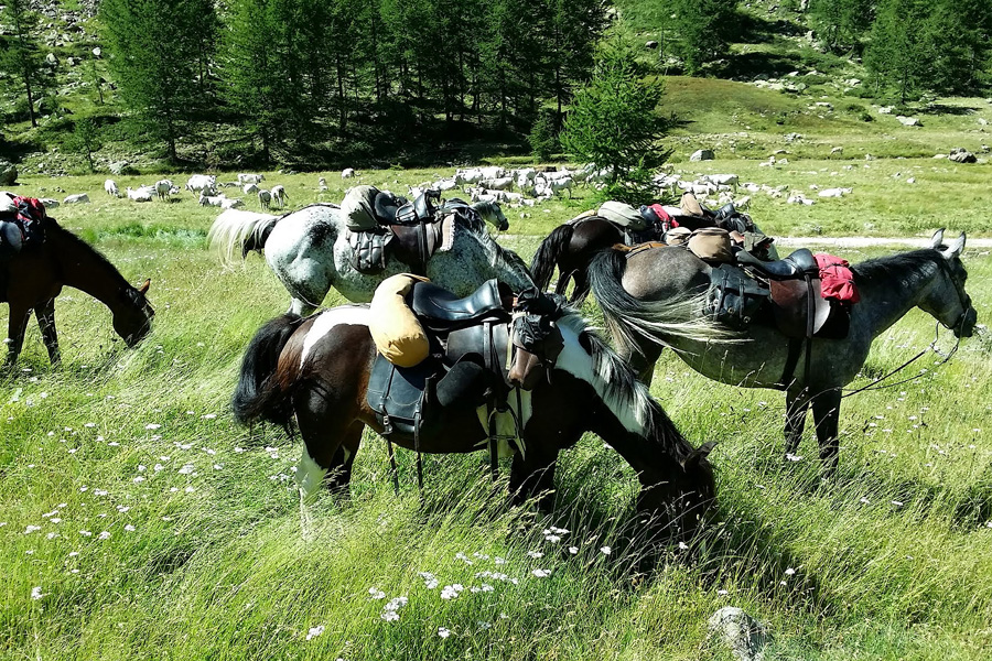 Horse riding holiday Mercantour