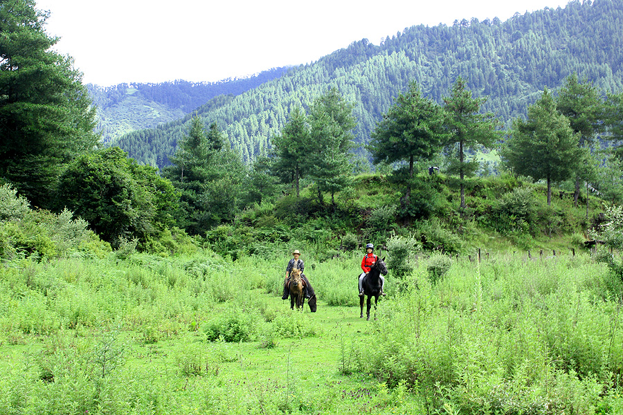 Explore Bhutan on horseback