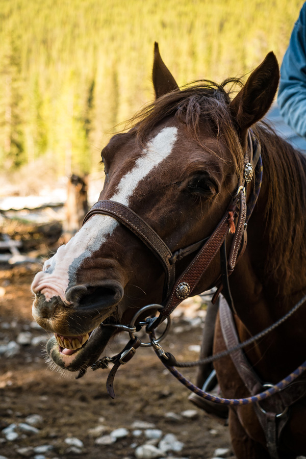 horse riding holiday Banff