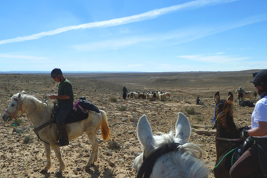 Horse riding with bedouin in Israel