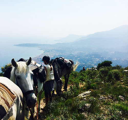 Horses and riders enjoying the view