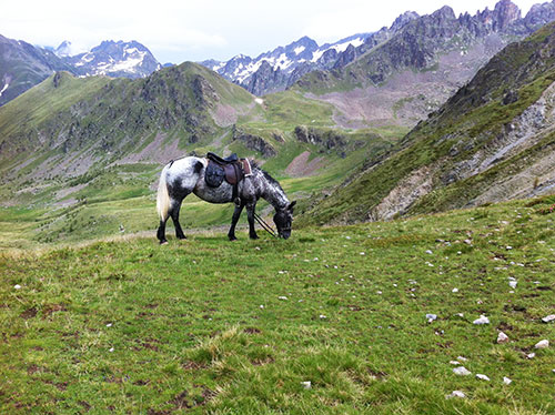 Grazing in the alps