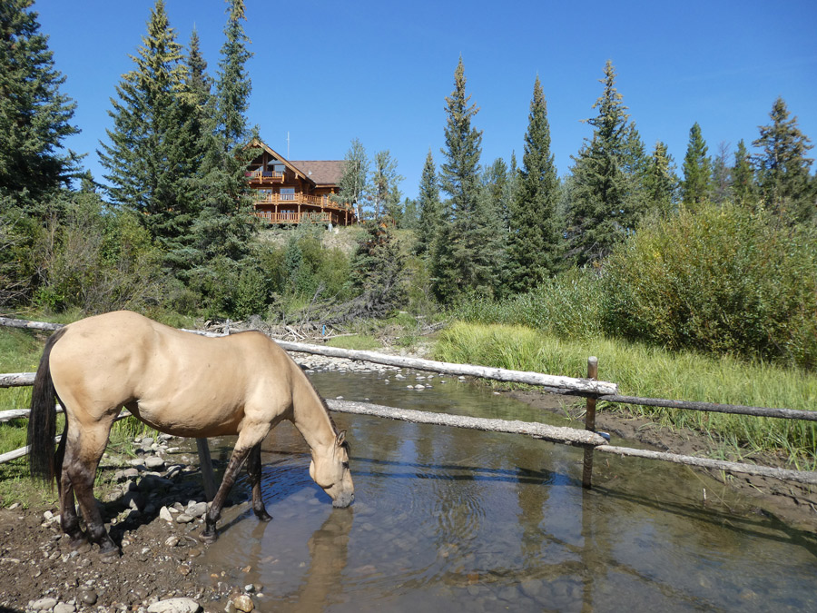 Horse grazing next  to the lodge