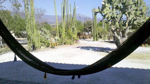 Hammock at the ranch