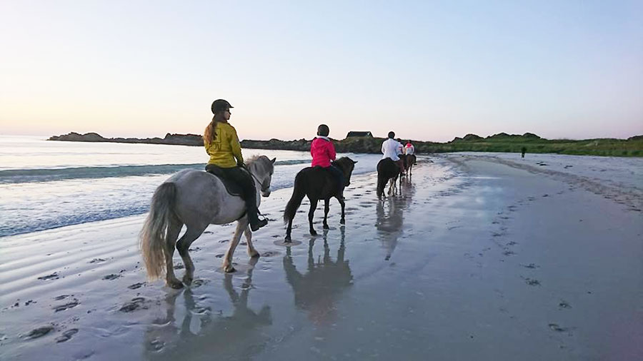 Exploring Lofoten beaches on horseback