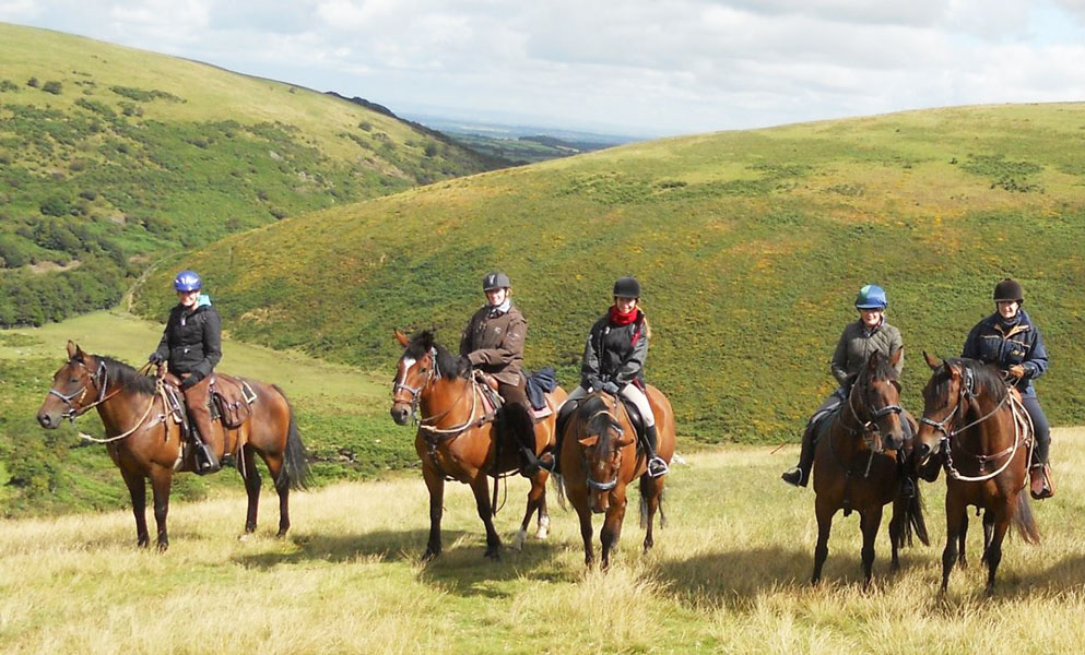 Bay horses Dartmoor