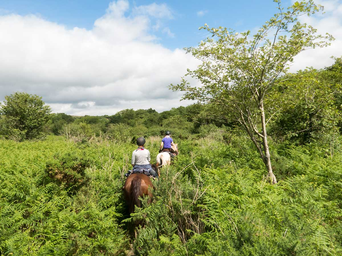 Rdiing through thick brush on Dartmoor