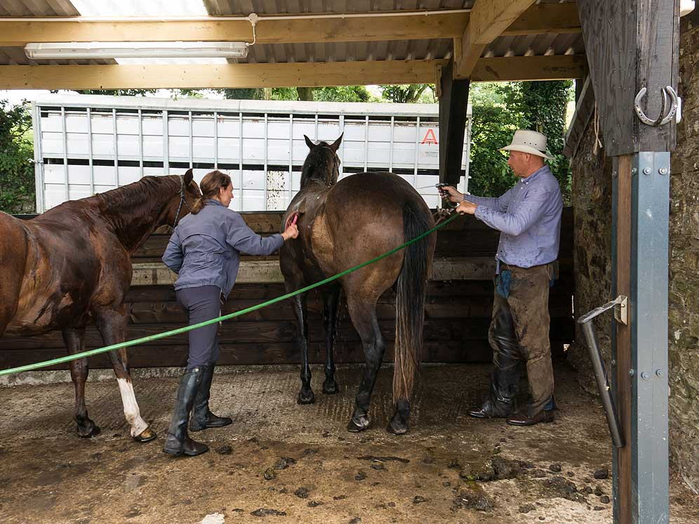Washing the horses on return
