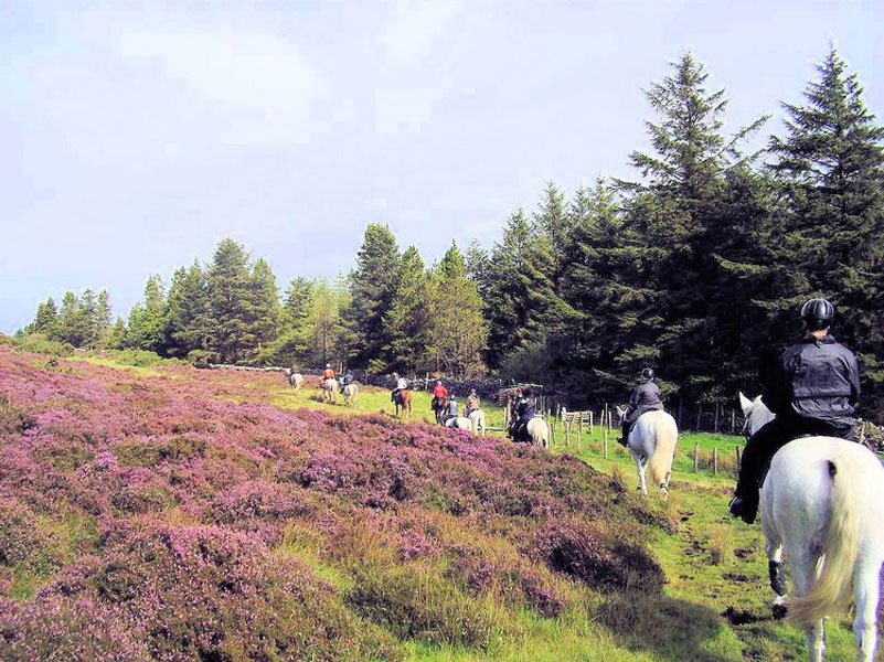 Riding by the heather