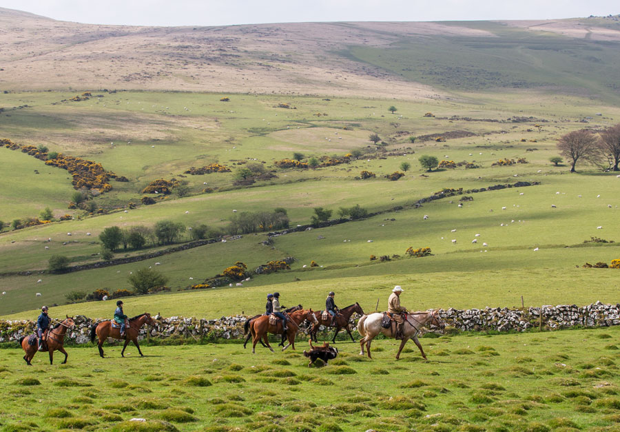 Riding on the moors