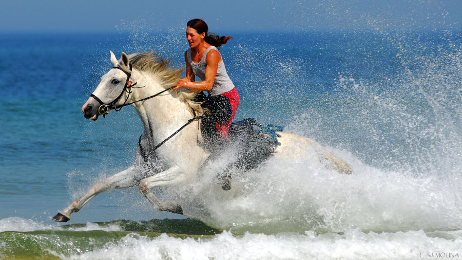 Gallop through the surf!