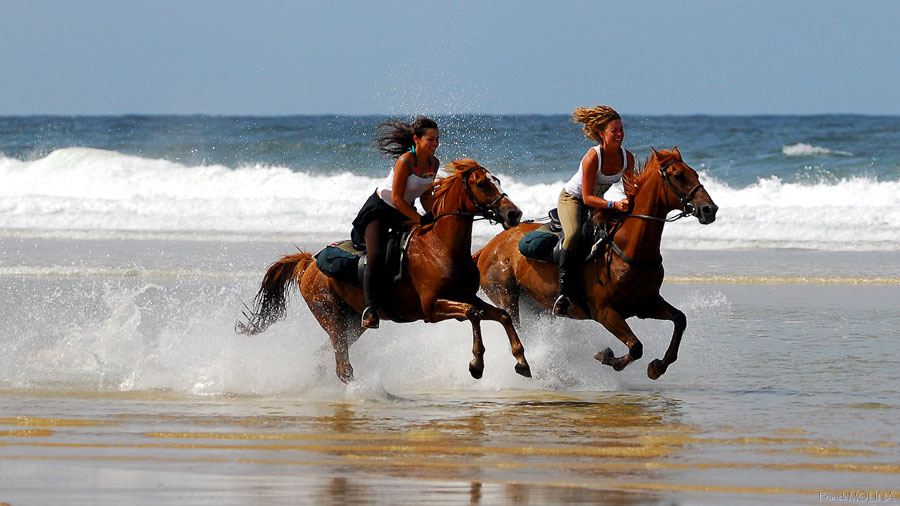 2 friends galloping on the beach