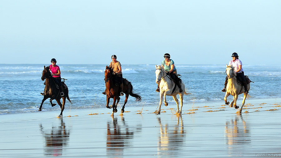 A group of friends enjoy a sedate canter on the beach