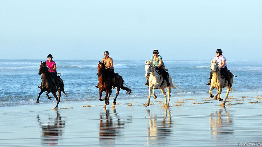 Atlantic Coast Trek, France | Horse Riding Holidays