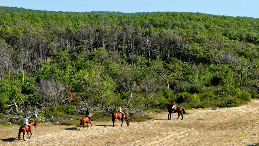 The Landes forest is ideal for riding along sandy tracks