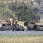 Botswana – Mellan palmöar i Okavangodeltat