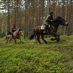 Sverige – Småland – Höglassisk ridning på Nordsvenskar och Islandshästar