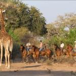 Sydafrika – Kombinationsafari Sydafrika & Södra Botswana