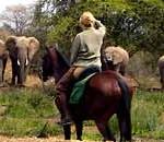 Tanzania – Sju Fantastiska Safaris